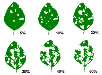 Visual Guide to Soybean Defoliation
