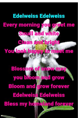 Edelweiss flower and Edelweiss Song Lyrics
