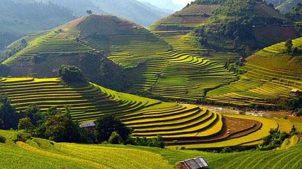 Rizieres en terrace Nord Vietnam