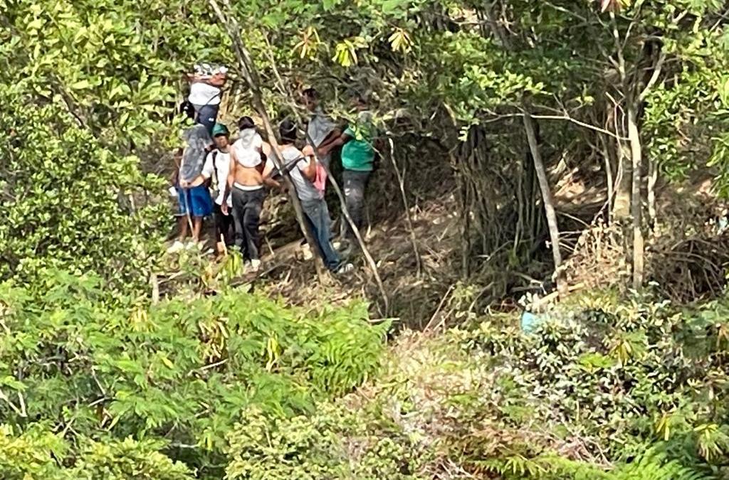 Con machetes invasores talan árboles en Bellavista- Cali