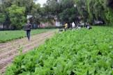 DESARROLLO RURAL Y AGROPECUARIO (1)