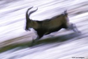 Nociones fotográficas- La velocidad