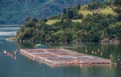 Tierra del Fuego aprobó una legislación pionera en el mundo al prohibir la cría de salmones