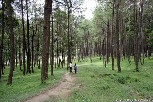 Camminando per i boschi del Nepal