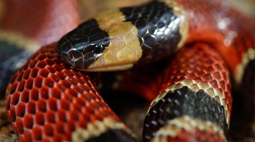 serpiente por