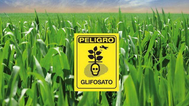 ¿Tortillas envenadas? El glifosato usado en herbicidas podría estar en tu mesa