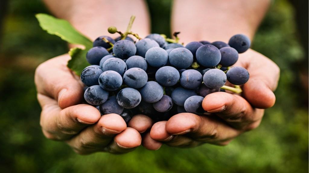 Descubren molécula en las uvas que bloquea la propagación de células cancerosas