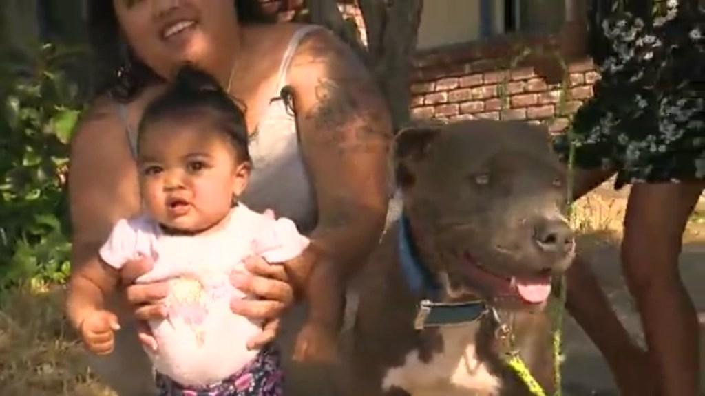 Conoce a Sasha, la pitbull que salvó a bebé de un incendio arrastrándola del pañal