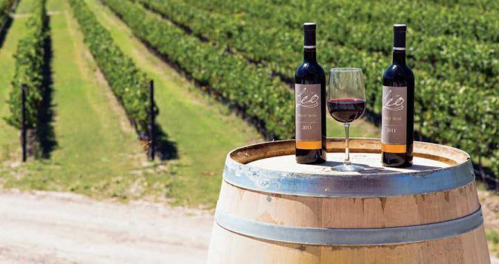 El mejor vino del mundo ¡es mexicano! El Cabernet Sauvignon Gran Reserva Don Leo