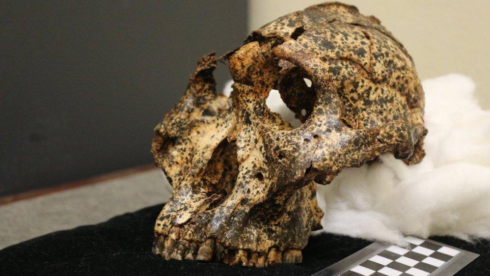 Paranthropus robustus: el fósil que revela el clima extremo que sufrió la especie humana