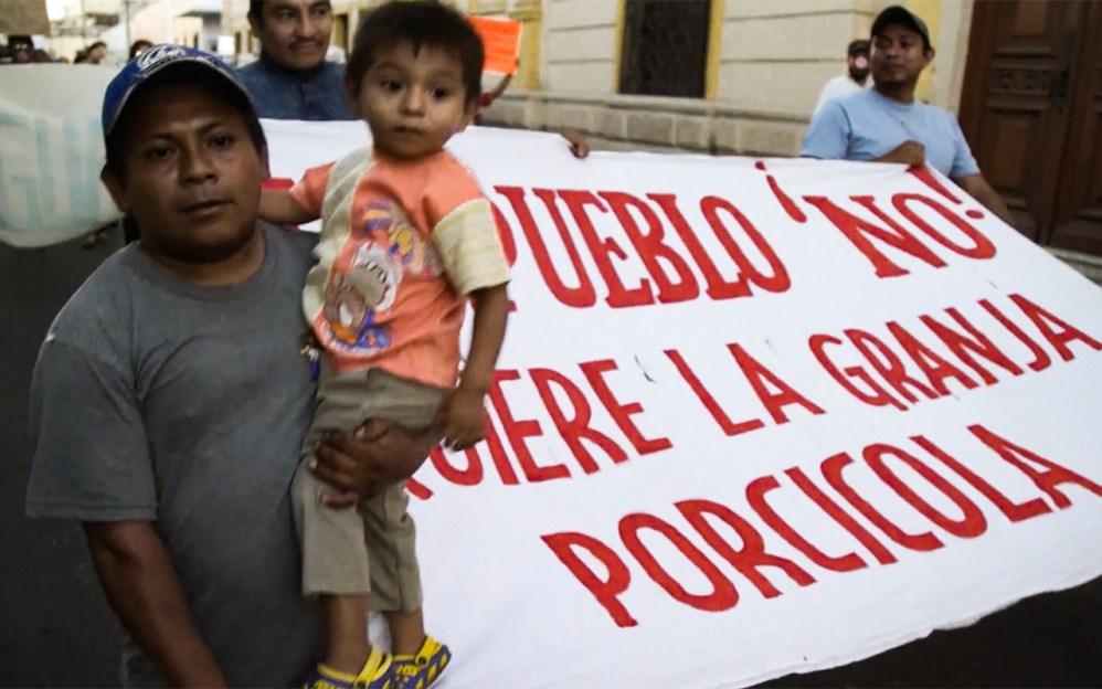 Alto a las granjas industriales porcinas que contaminan la Selva Maya: Greenpeace