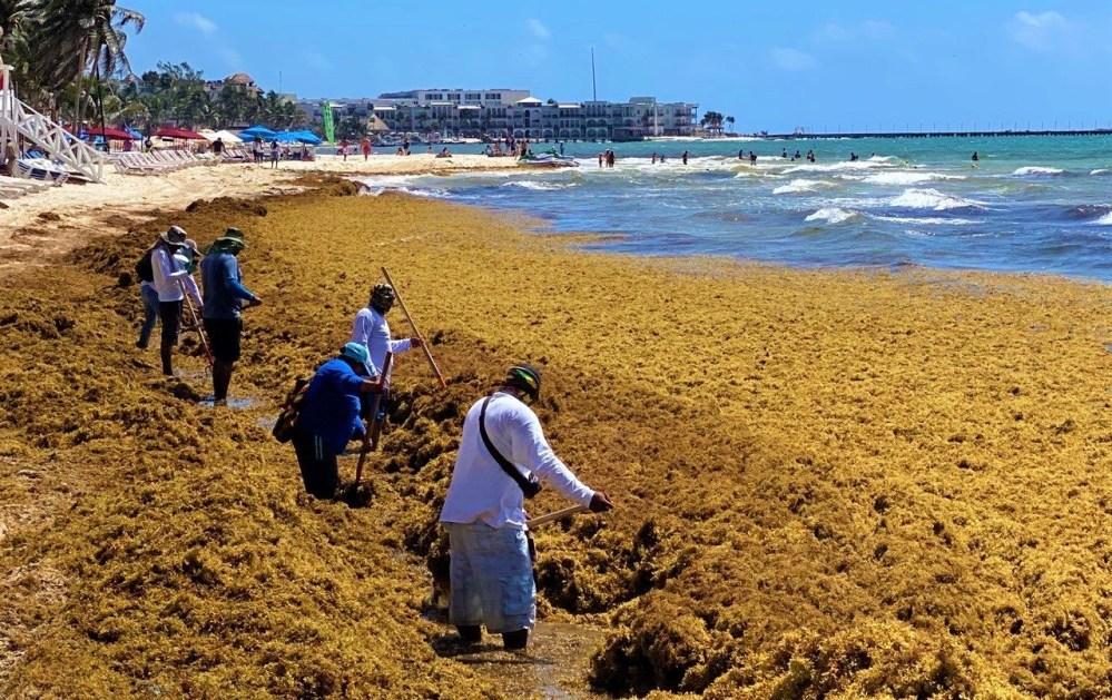 Toneladas de sargazo inundan playas de Quintana Roo