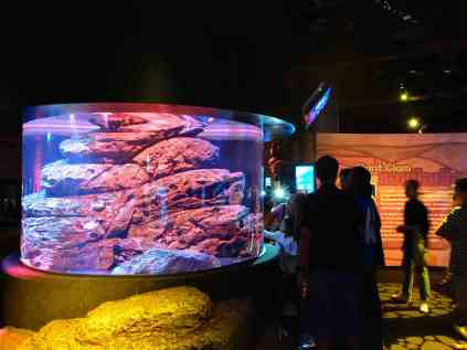 Giant Crab Aquarium
