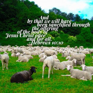 hebrews-10-10-black-sheep-500sq