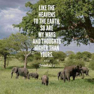isa-55-9-elephants-500sq
