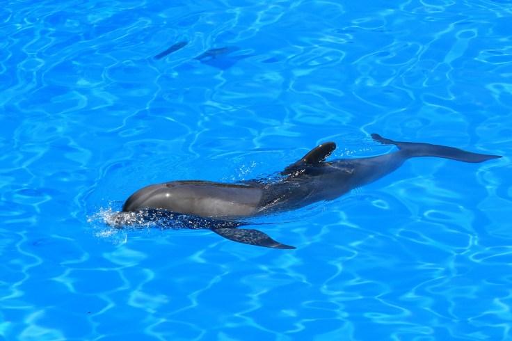 delfin-1989625_1920 (1)