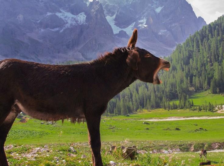 donkey-2926641_1280.jpg