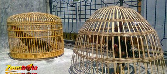Manfaat Dalam Penjemuran Ayam Bangkok Aduan