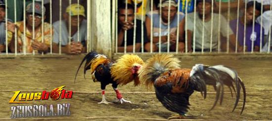 Arena Sabung Ayam Online S128.net