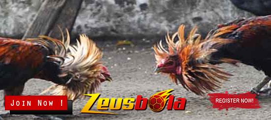 Daftar S128 Sabung Ayam Online Terpercaya