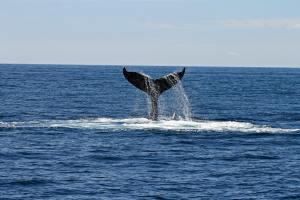 Whale Watch @ Newtown Senior Center | Newtown | Connecticut | United States