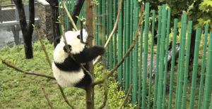 VIRTUAL EVENT: Animals of the World Live Camera