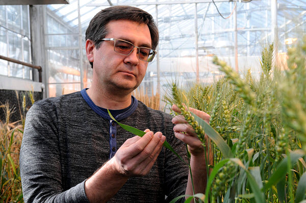 eduard_akhunov_wheat_researcher_kansas_s