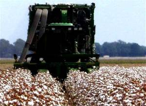cotton-picker-mississippi-state-dodds-09232014-facebook-600