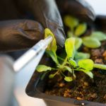 Biotech and Biologicals Take Center Stage at 2015's Ag Innovation Showcase