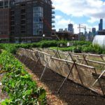 10 American Cities Lead Urban Agriculture