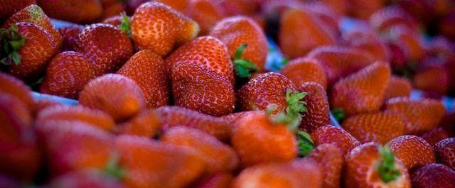 Farmstr, an Online Marketplace for Local Produce, Raises $1.3M