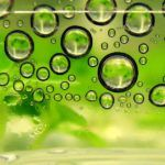 New Method for Efficient Biofuel Production from Plant Matter