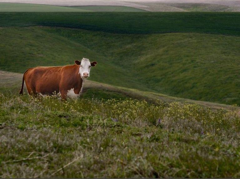 Silent Herdsman, a Smart Cow-Collar Startup, Raises £3M