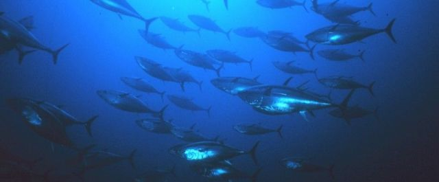 'SafetyNet' May Get the Fish We Want, Without the Bycatch