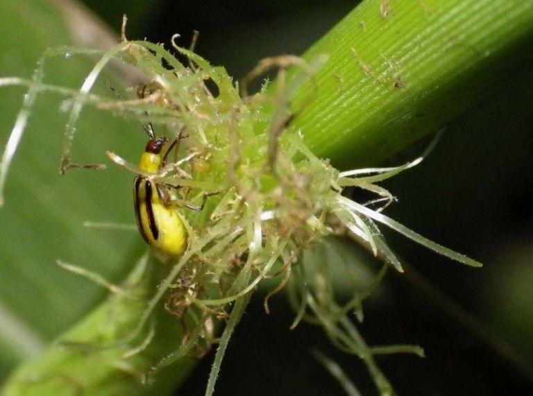 Let's Talk Pest Resistance Tech, Say Scientists