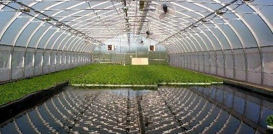 Aquaponics: The next big thing in agriculture