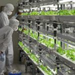 Fujitsu, World's Third Largest IT Company, is Growing Lettuce