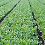 Forbes Announces 'AgTech Summit' for Summer 2015