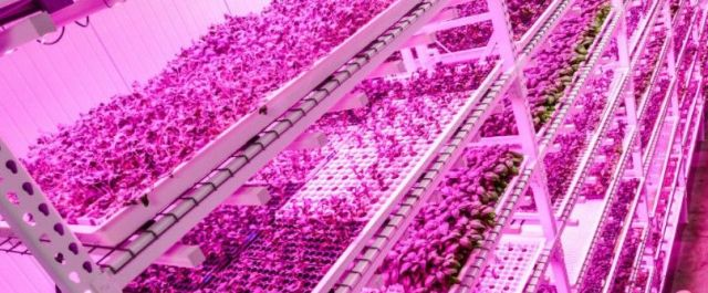 Country's Largest Vertical Farm Ditches Sunlight, Uses LEDs