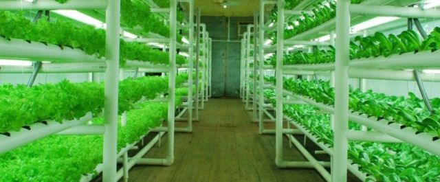 PodPonics, Hydroponic Produce Grower, Closes a $3.4M Series A