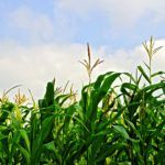 Crop Protection Product Developer Asilomar Bio Announces $3M Series A Round
