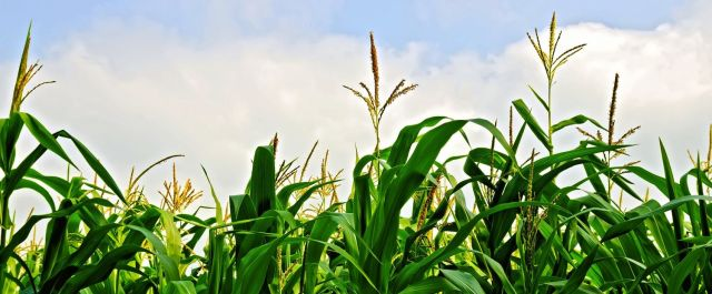 Crop Protection Product Developer Asilomar Bio Announces $3M Series A Round