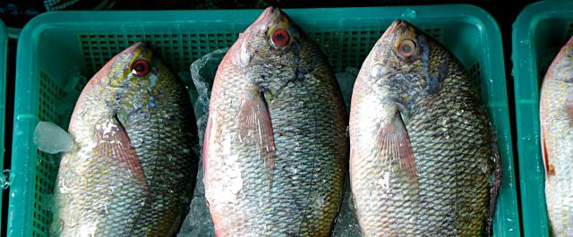 Can DNA Barcoding Prevent Seafood Fraud for Good?