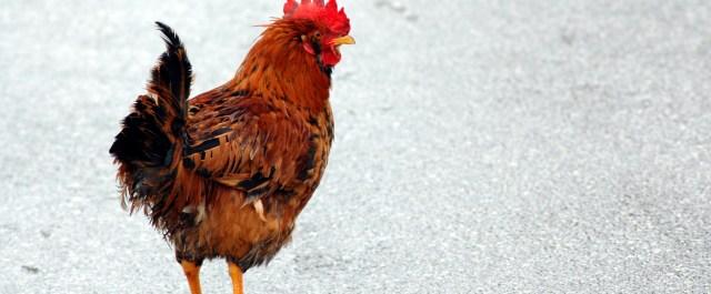 4 Q&As with Dr. Amit Gefen on Developing a Bioengineered Chicken Breast