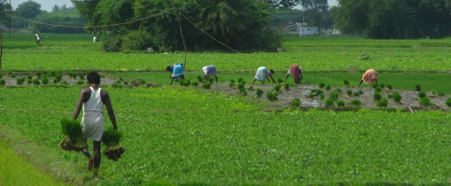 """Part Two: Is Indian Agriculture Ready for """"Gadgetization""""?"""