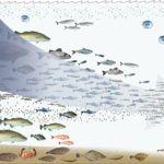 Fish 2.0: Bridging the Gap Between Investors and Aquaculture