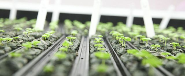 How Canadian Vertical Farming Company TruLeaf Aims to Prevent Disease Through Nutrition