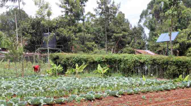 6 Questions with Kenyan Irrigation Tech Provider SunCulture on Startup Funding Challenge