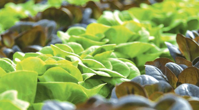 Consumer Demand For 'Clean Food' Driving Asia's Indoor Agriculture Market – breaking report
