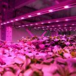 Canadian Indoor Ag Player TruLeaf Ramps Up Distribution